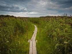 Footpath leading through green bushes